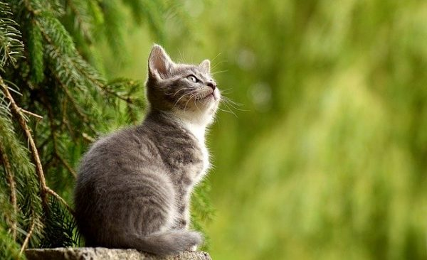 Cutest Cat Breeds in the World